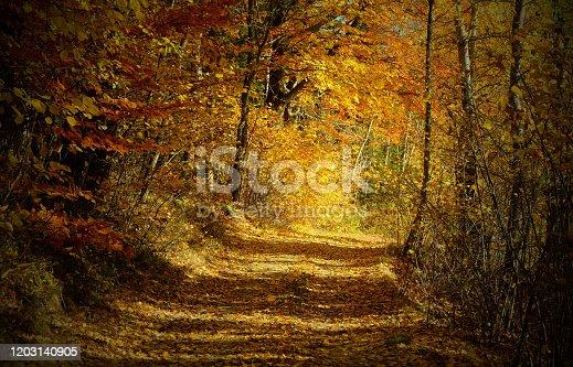walk through the autumn forest