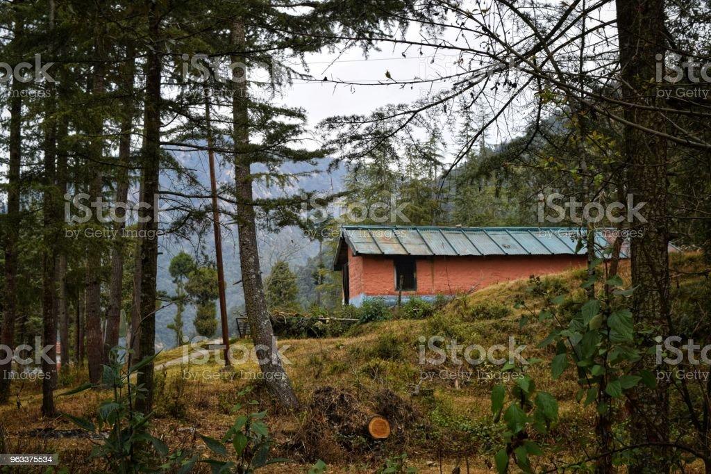 A walk through the Pine forest - Zbiór zdjęć royalty-free (Bez ludzi)