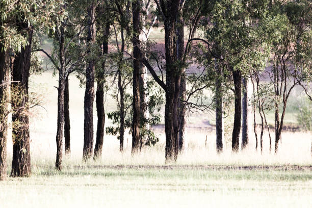 walk through the woods - stephen lynn stock pictures, royalty-free photos & images