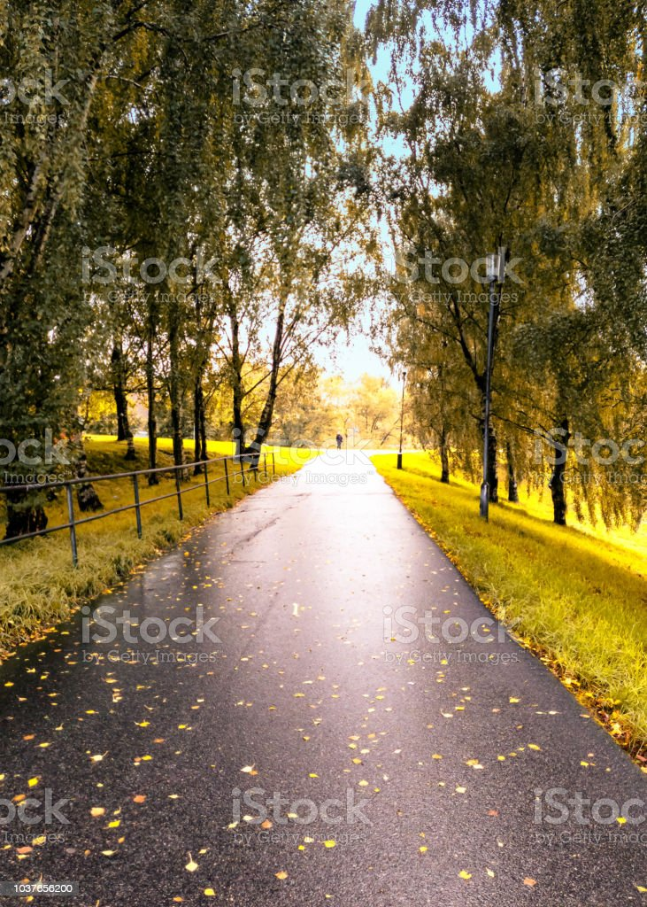 Walk way in gothenburg with trees and setting sun stock photo