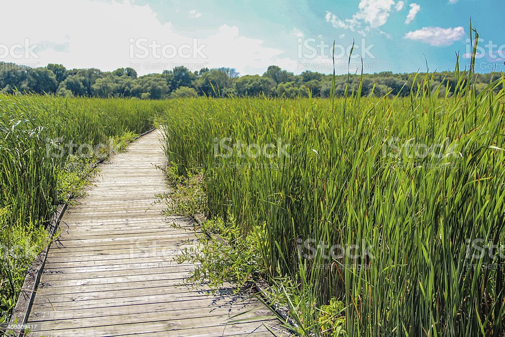 Walk way in grass field stock photo