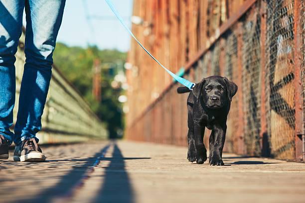 Walk with dog picture id589434404?b=1&k=6&m=589434404&s=612x612&w=0&h=hquhjkhw9scvcwlochavg9pouhzfrkpgpfuadrkshms=