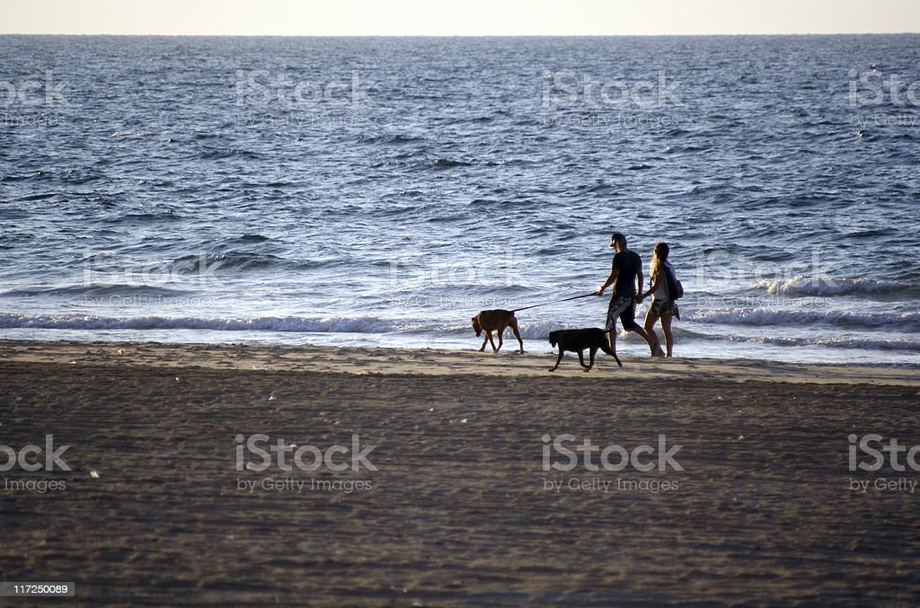 Walk with dogs royalty-free stock photo