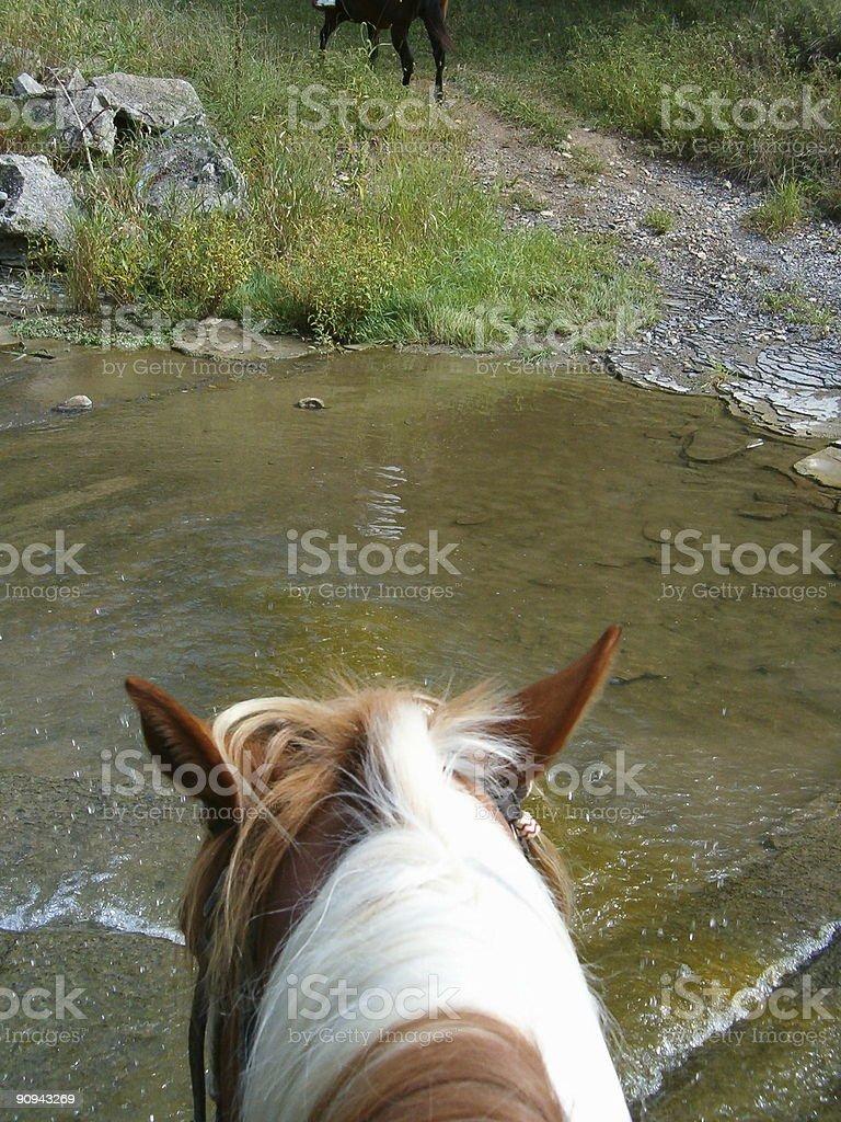 Walking a Horse Through Creek stock photo