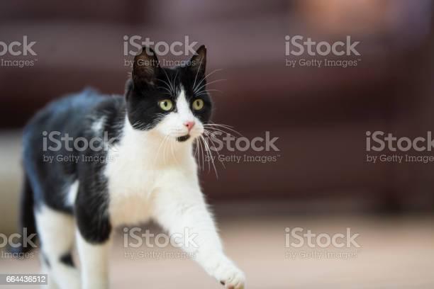 Walking cat picture id664436512?b=1&k=6&m=664436512&s=612x612&h=cpswttrsy3blcwdvjhz2f0hgiu3hkgbxzb8c3crafhc=