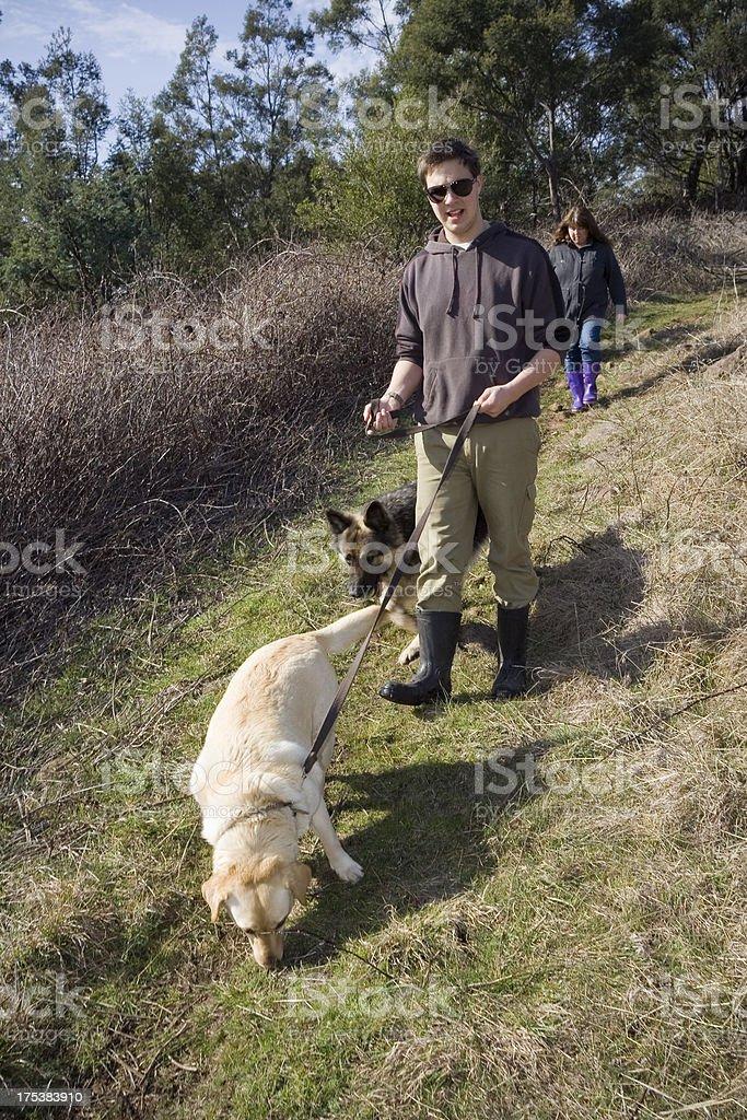 Walking Hunde Lizenzfreies stock-foto