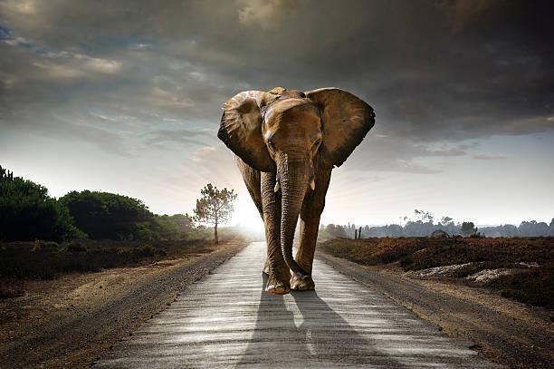 Deux éléphant - Photo