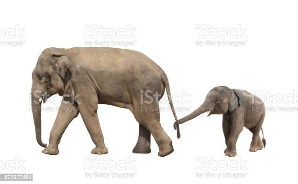 Walking family of elephant mom and baby picture id872927484?b=1&k=6&m=872927484&s=612x612&h=efocpt25vldllhba74ao1ona7xaywmzkbseth8d60c0=