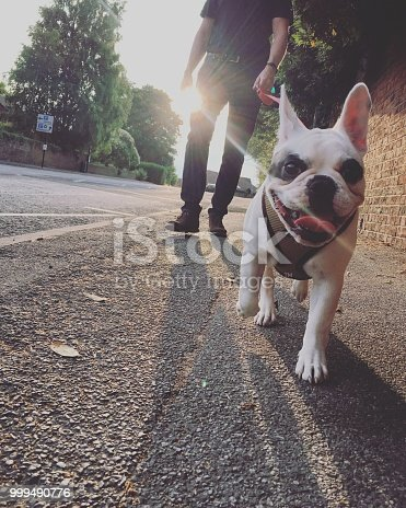 Walking dog in the evening