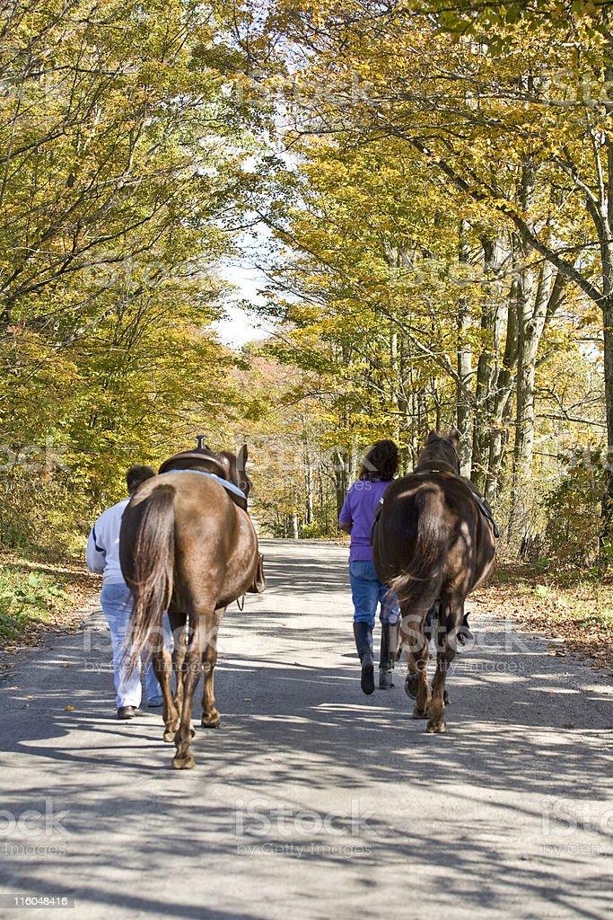 Walking Horses stock photo