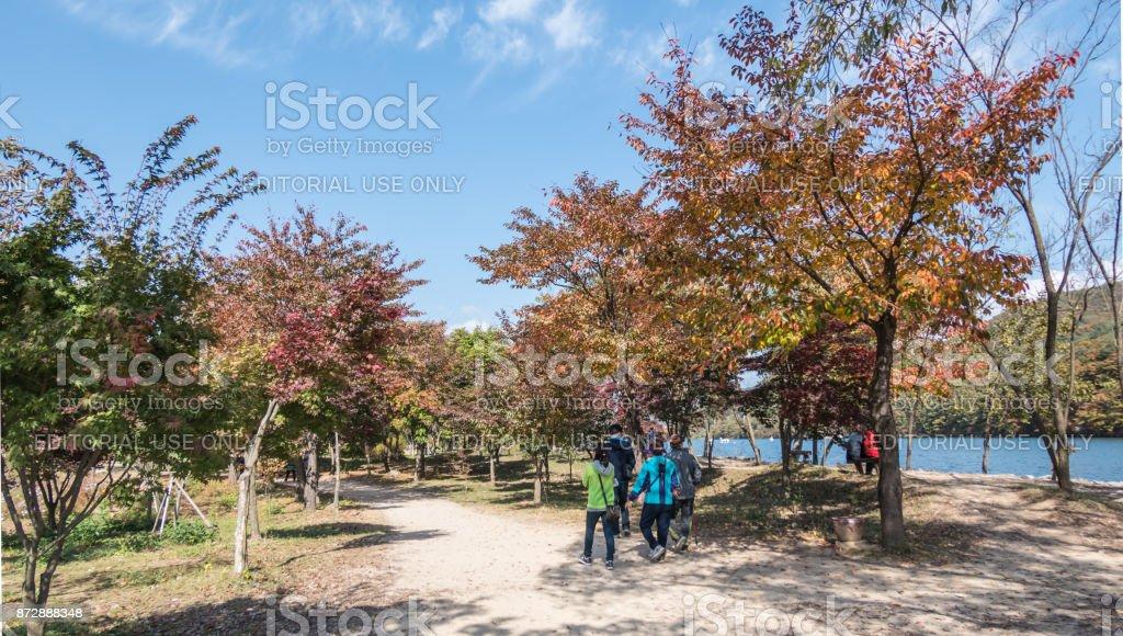 Walking in Autumn colour on Nami Island in South Korea stock photo