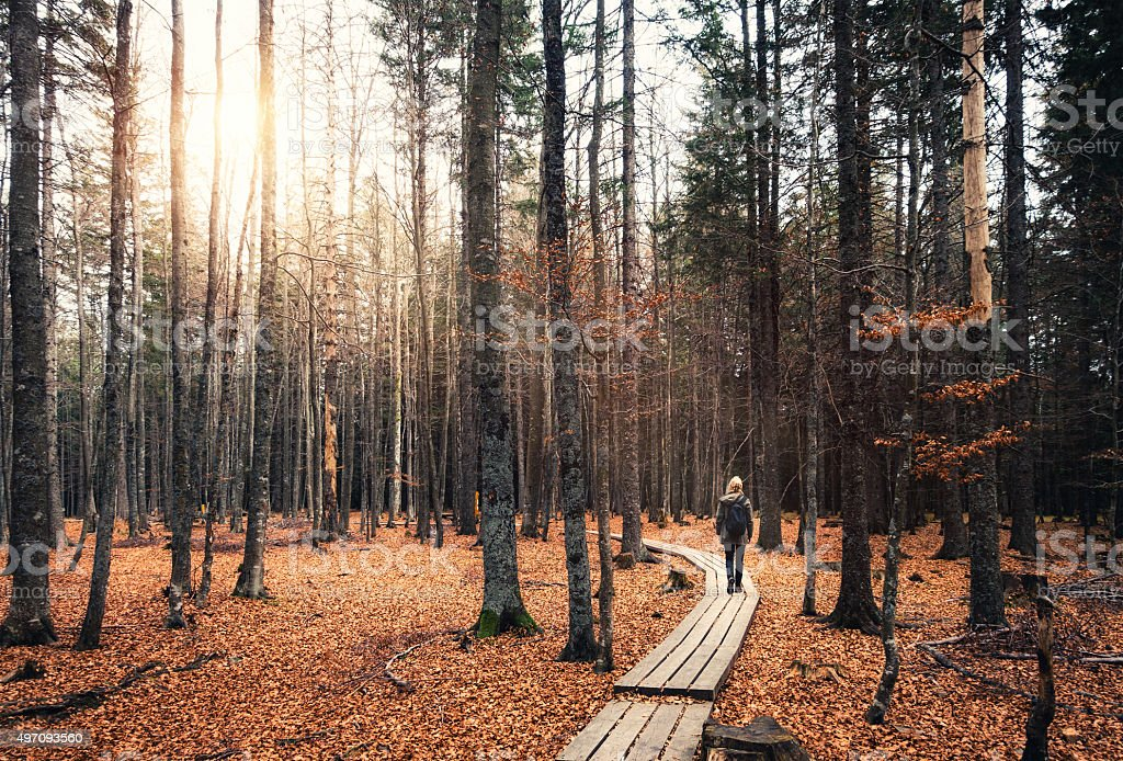 Walking In Autumn Forest royalty-free stock photo