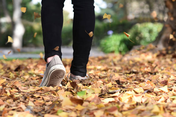 Walking in Fall Leaves walking in fall leaves wearing tennis shoes jude beck stock pictures, royalty-free photos & images