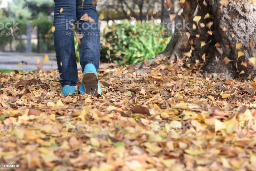 Walking in Fall Leaves stock photo
