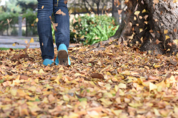 Walking in Fall Leaves the boots of a girl walking on a footbridge in the fall jude beck stock pictures, royalty-free photos & images