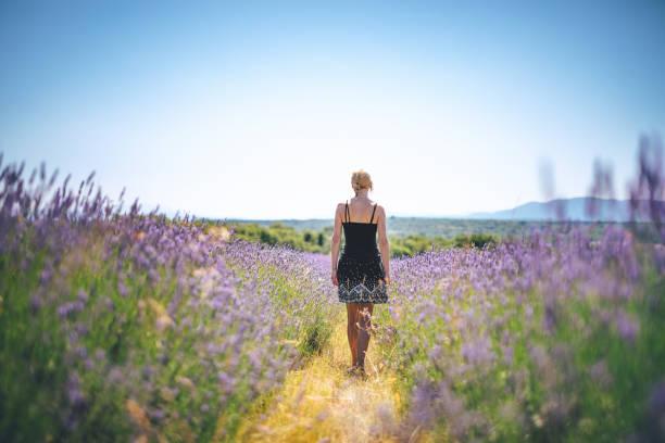 caminar en el campo de lavanda - lifestyle color background fotografías e imágenes de stock
