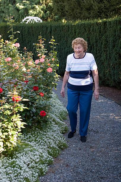 Walking in Rose Garden stock photo