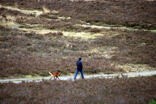 Walking in the heathland