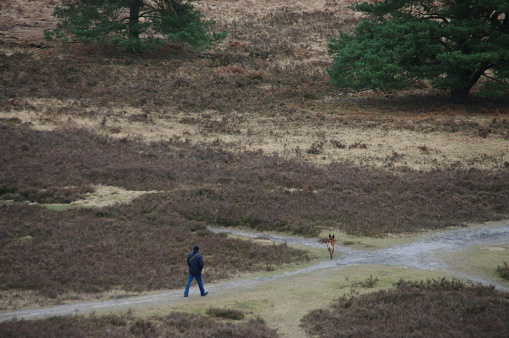 Walking in the heathland