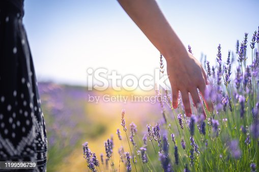 Woman walking down the field and touching the lavender flowers.