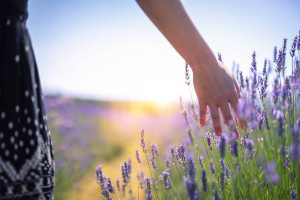 Walking In The Lavender Field Woman walking down the field and touching the lavender flowers. sensory perception stock pictures, royalty-free photos & images