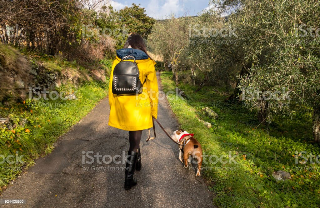 walking in the nature with a dog stock photo