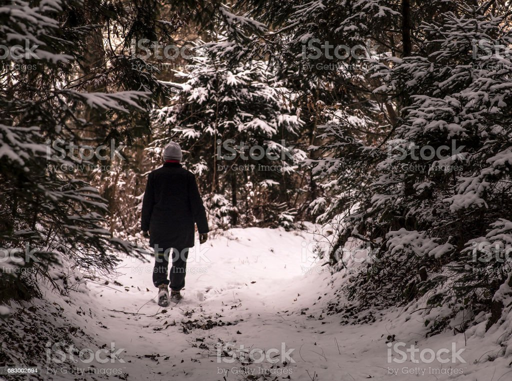 Walking in the snowy woods royalty-free stock photo