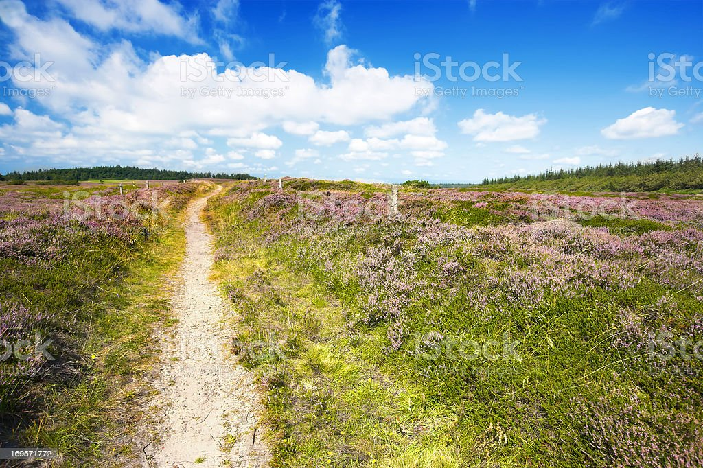 Zu Fuß in der wilden Blumen. Lizenzfreies stock-foto