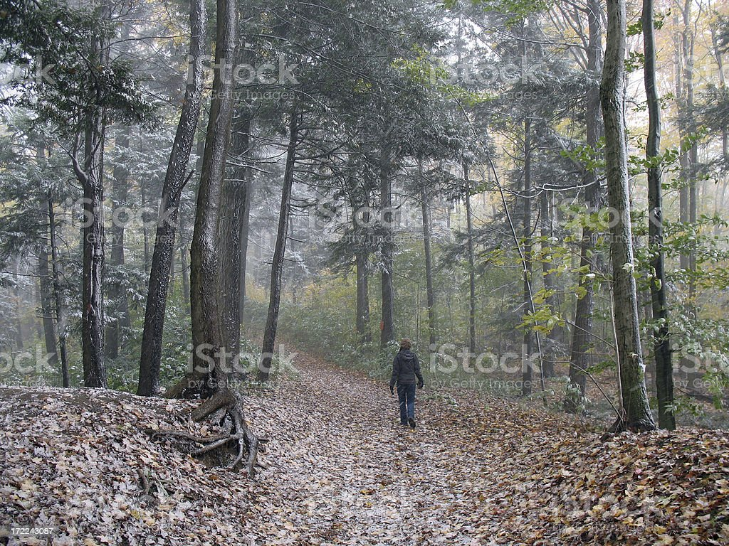 Walking in the Woods royalty-free stock photo
