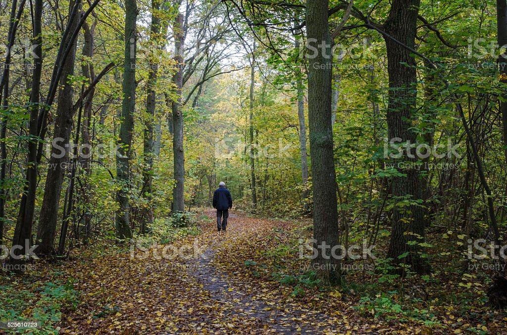 Walking man at a winding footpath at autumn stock photo