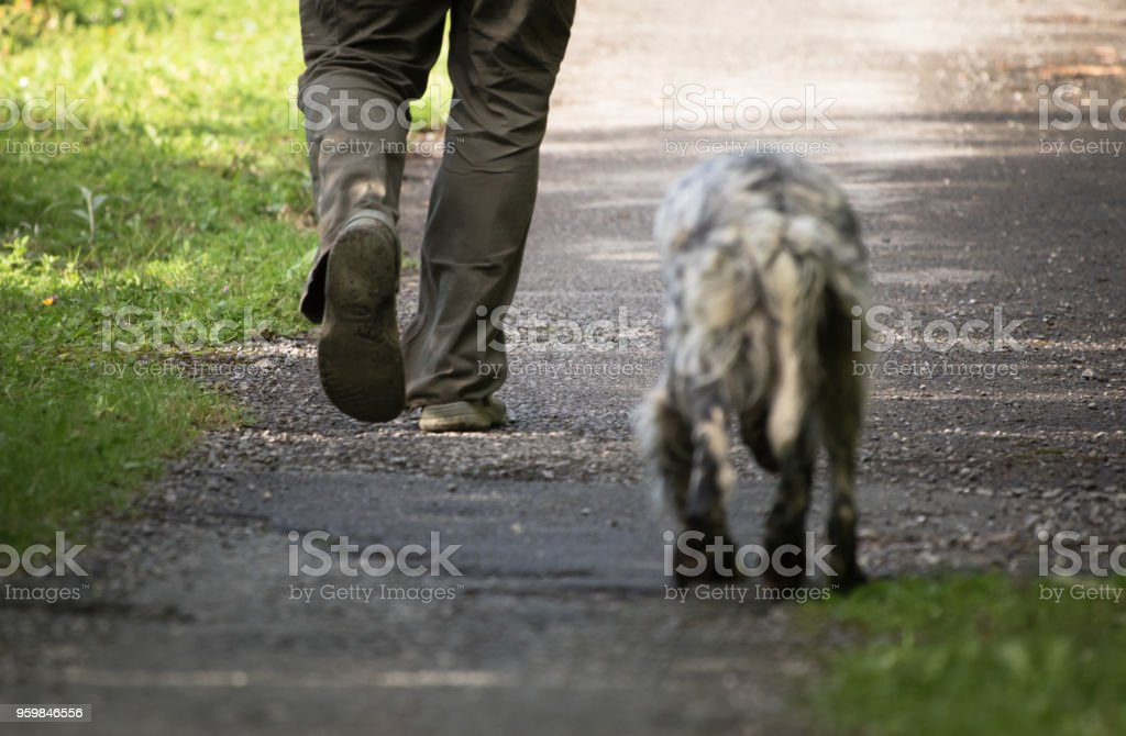 walking man\'s feet and hunting dog back view, recreation concept