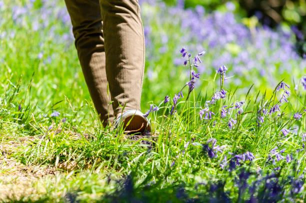 fuß auf einem feld von glockenblumen im frühling - schuhe auf englisch stock-fotos und bilder