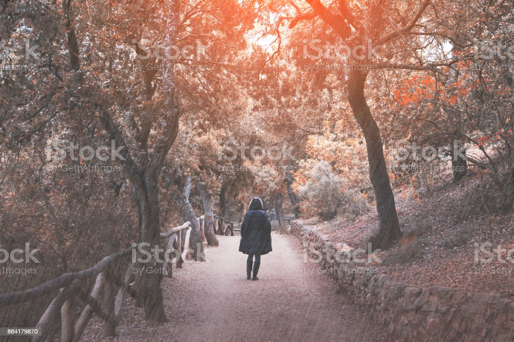 Walking on a rainy day in the autumn forest royalty-free stock photo
