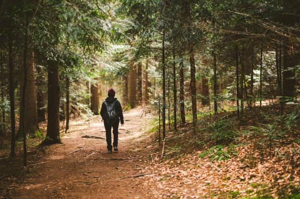 Walking on dark forest trail stock photo