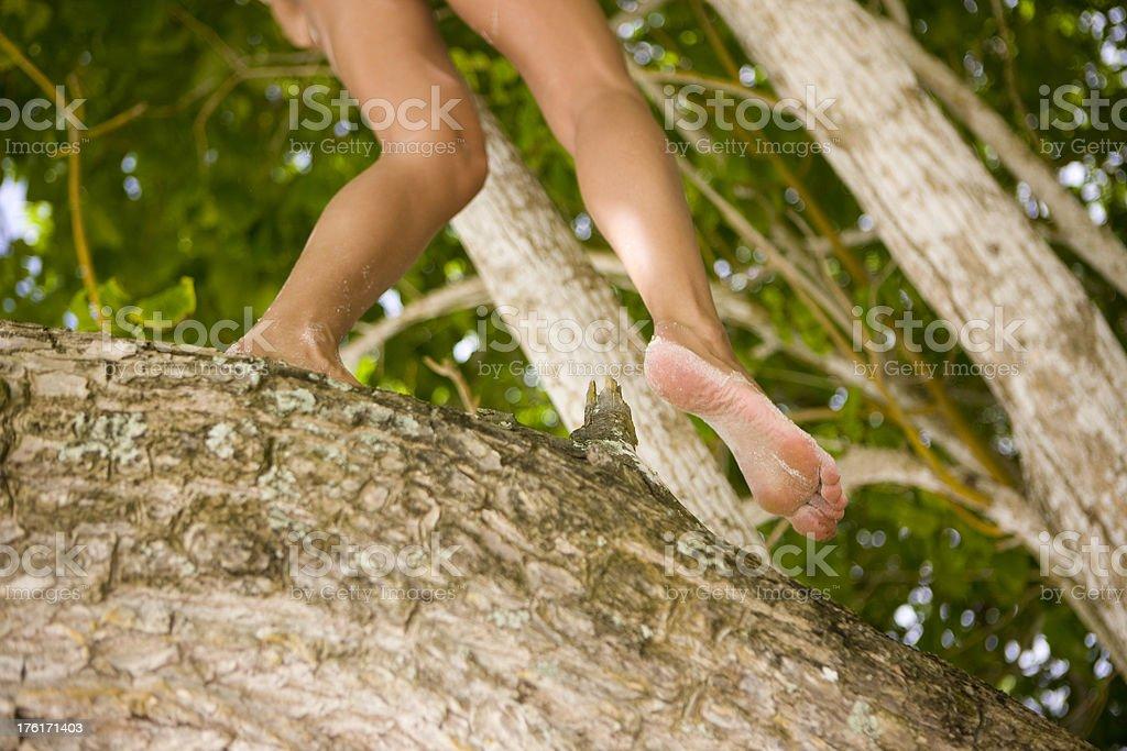 Walking on tree trunk royalty-free stock photo