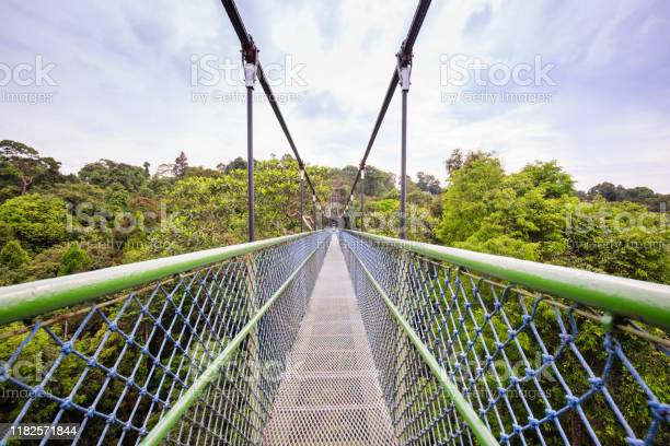 Photo of Walking over the green trees through a tree top walk in Singapore