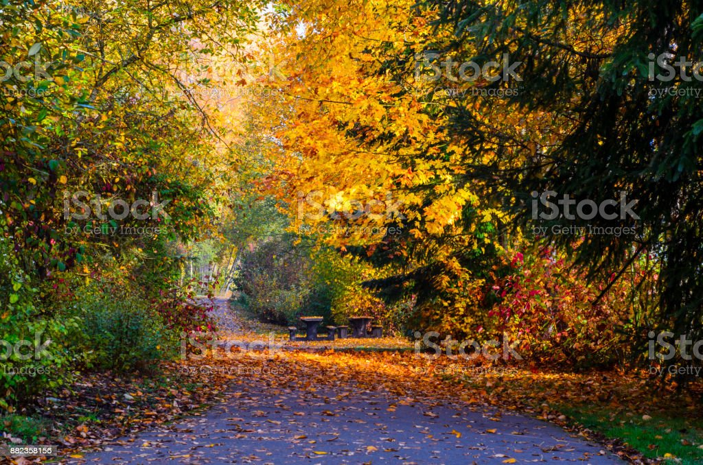 Walking Path Covered in Autumn Leaves stock photo