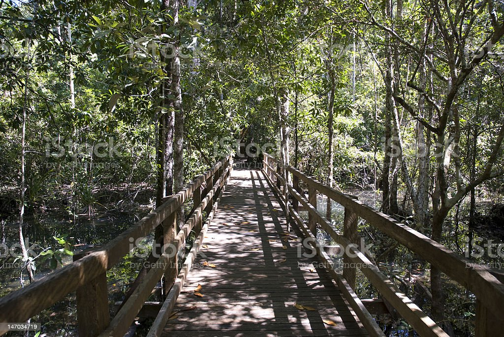 Walking path Daintree NP, Australia royalty-free stock photo