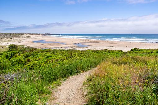 Walking path going through green shrubs towards a sandy beach; Gazos Creek Año Nuevo State Park, Pacific Ocean coastline, California