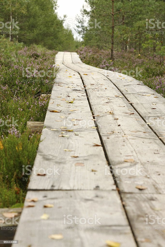 Walking path in forest stock photo