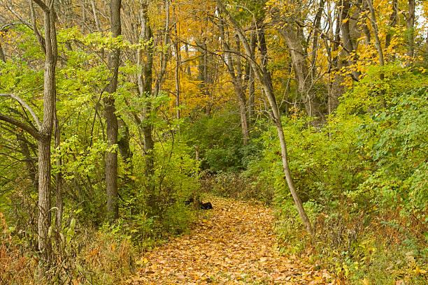 Walking Path through Autumn Trees, Bellbrook, Dayton, Ohio stock photo