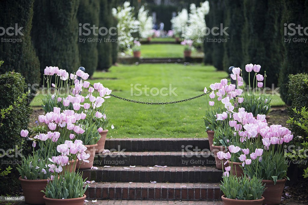 Walking path with Tulips royalty-free stock photo