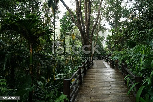 Walking paths made of wood head straight into the forest. The walkway is built for nature trails and can be used for walking and hiking.
