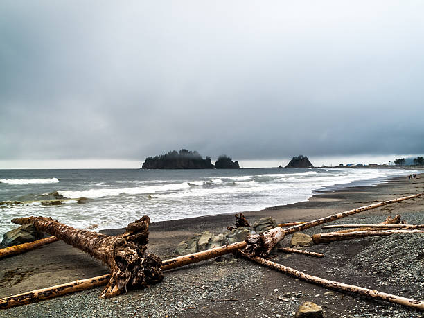 walking people on the beach of la push - native american reservation stock photos and pictures