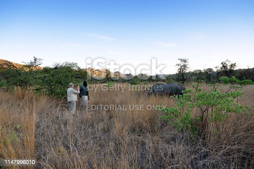 Matopos National Park,Zimbabwe - December 01, 2018: Female tourist is taking pictures with a smart phone, of a grazing white rhinoceros, during a walking safari in the late afternoon in the Matopos National Park near Bulawayo. She is accompanied by an African guide.