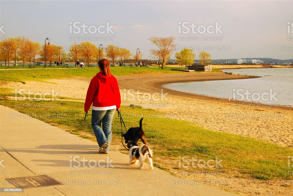 Walking the Dog along the shore South Boston, MA, USA May 5, 2008 An adult woman talks her dog for a walk along the shores of Pleasure Bay in South Boston, Massachusetts Adult Stock Photo