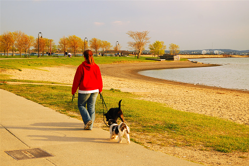 Walking The Dog Along The Shore Stock Photo - Download Image Now