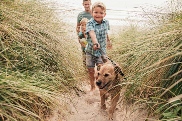 walking the dog at the beach - family vacation stock photos and pictures