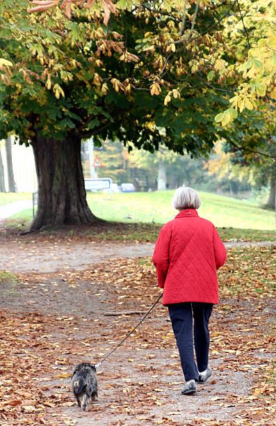 Walking the dog in autumn picture id139874392?b=1&k=6&m=139874392&s=612x612&w=0&h=incjcq8tid1utoitev2kbodeg756wse84d l ogfoka=