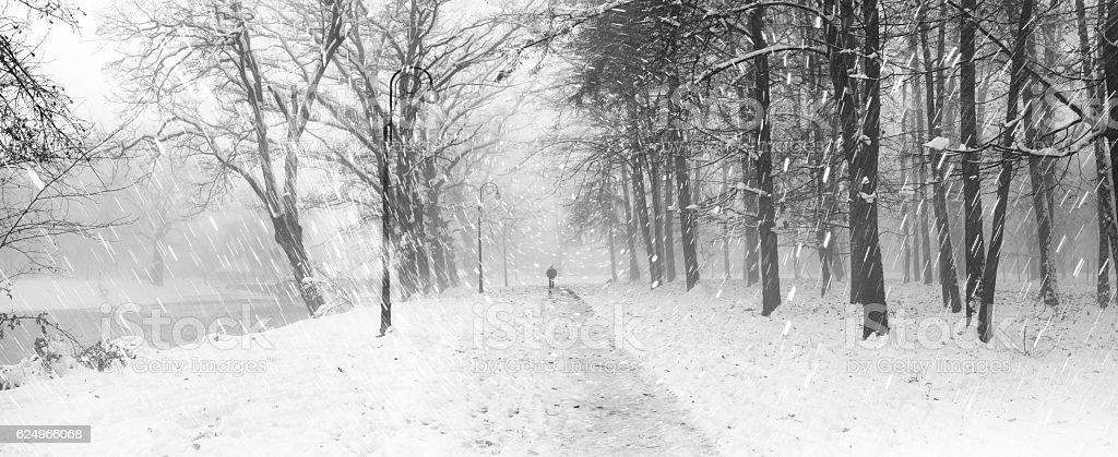 Walking the dog in the fog – Foto
